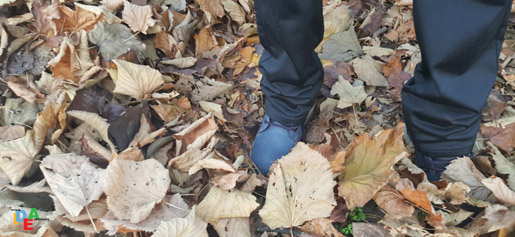 goretex-foglie