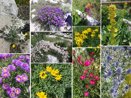 giardinobotanico1