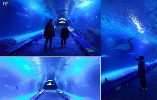 oceanografico3